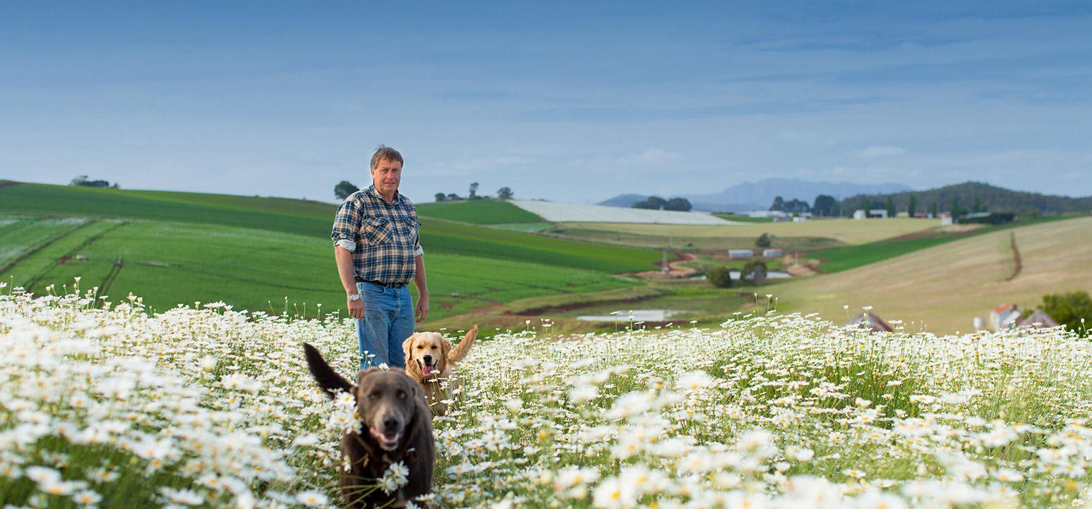 header-dogs-running-through-flowers