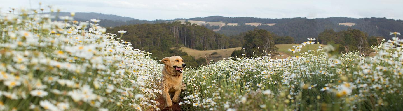 header-dog-in-field